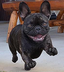 Hazel the Rocky Mountain Veterinary Services Mascot